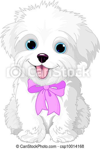 White lap-dog - csp10014168