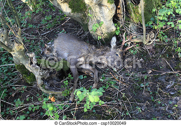 Stock Photo Of Dead Deer On The Forest Floor Half Eaten
