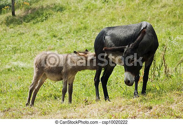 mother nursing her little ass - csp10020222
