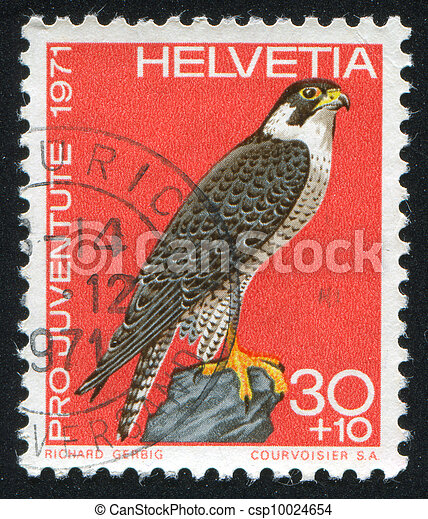 bird Peregrine falcon - csp10024654