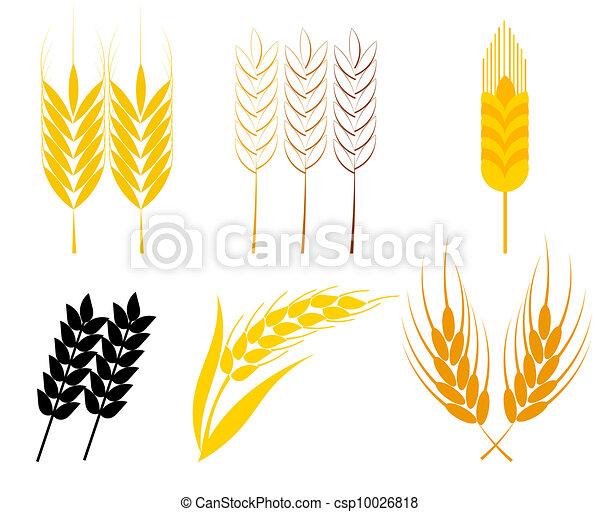 Wheat ears - csp10026818