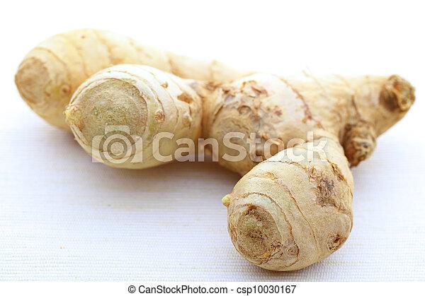 ginger - csp10030167