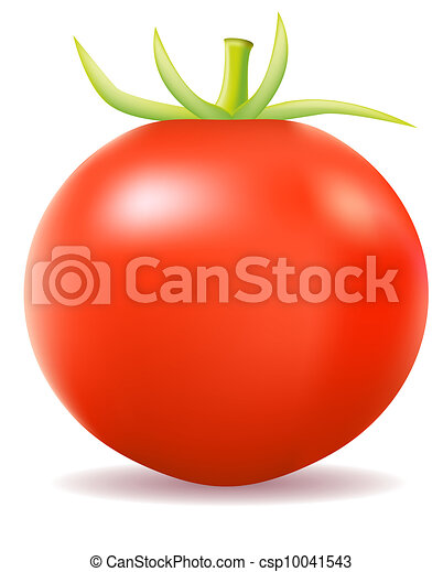 tomato vector illustration - csp10041543