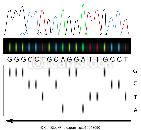 DNA sequencing  - csp10043090