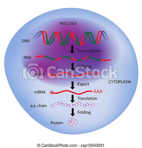 Gene expression - csp10043091