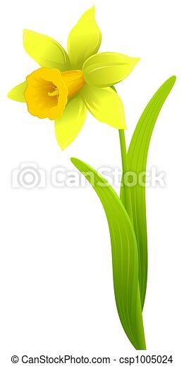 Dessin de jonquille unique jonquille fleur isol sur - Dessin jonquille fleur ...