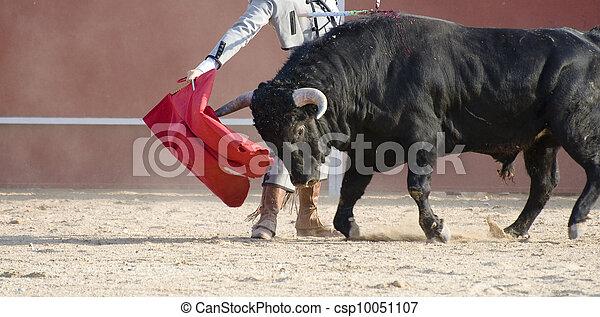 战斗, 公牛, 图画, 西班牙, 黑色, 公牛