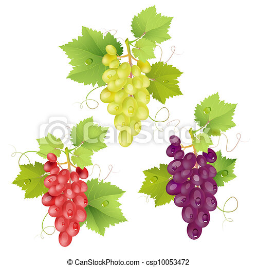 Three cluster of grapes - csp10053472