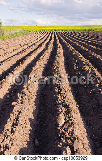 ploughed  agriculture field for potatoes - csp10053929