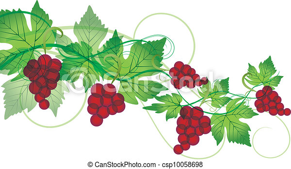 red grapes - csp10058698
