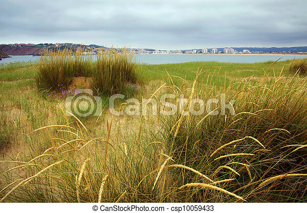 Beach Vegetation - csp10059433