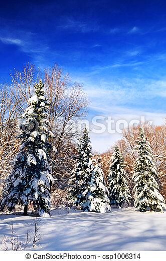 Winter forest - csp1006314