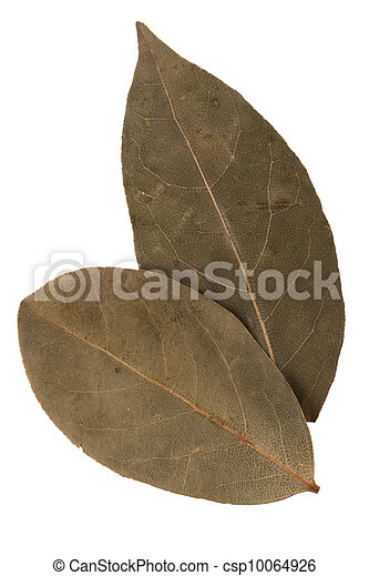 Aromatic bay leaves - csp10064926