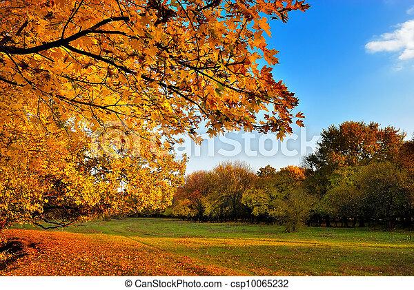 秋季, 枫树, 树 - csp10065232