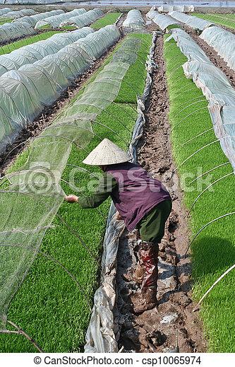 Asia farmer - csp10065974