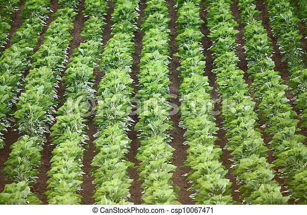 Agriculture - csp10067471
