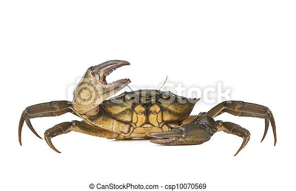 壁纸 动物 甲壳类 昆虫 桌面 450_296