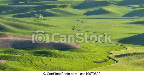 Rolling Hills of the Palouse - csp10079623