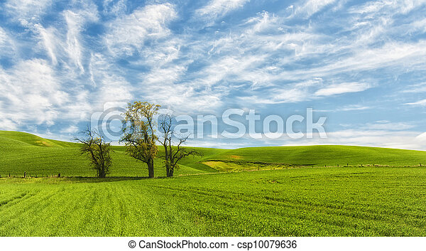 Rolling Hills of the Palouse - csp10079636