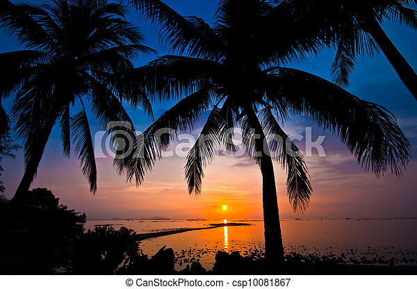 coconut tree silhouette at sunset - csp10081867