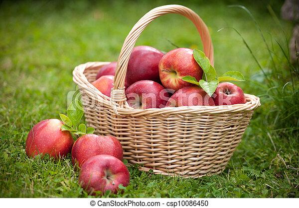 Fresh ripe apples in basket - csp10086450