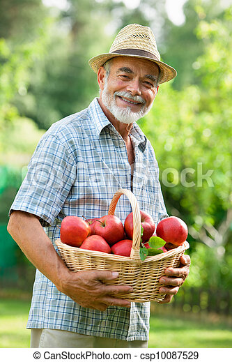 Gardener with a basket of ripe apples - csp10087529