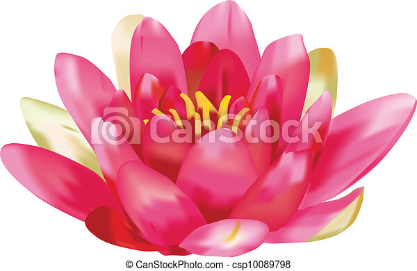 Water lily vector - csp10089798