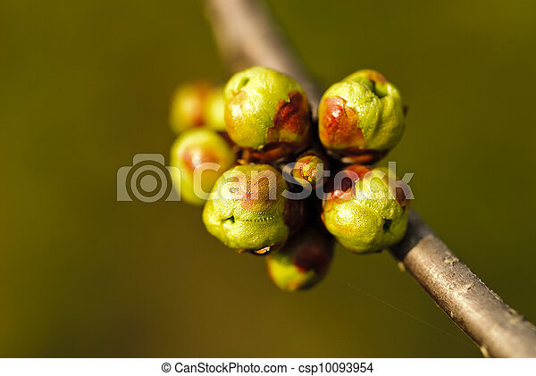 Buds macro - csp10093954