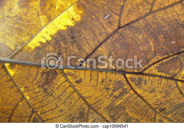 dry leaf on textured paper