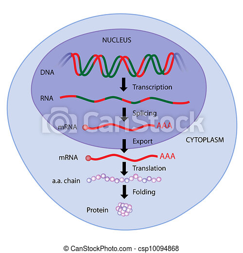 Free Expression Drawing Vector Gene Expression Eps8