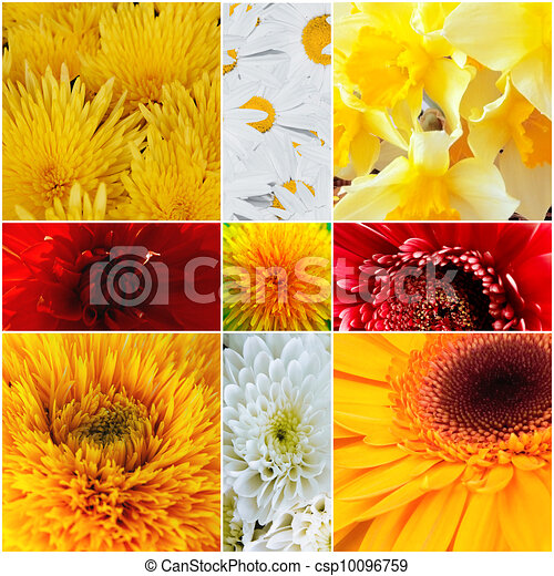 Yellow and red petals of gentle flowers - csp10096759