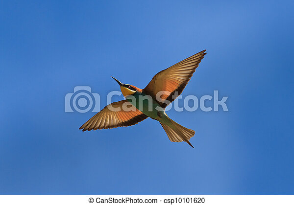 european bee-eater (Merops Apiaster) - csp10101620