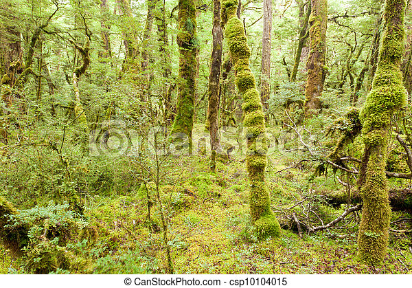 Virgin rainforest wilderness of Fiordland NP NZ - csp10104015