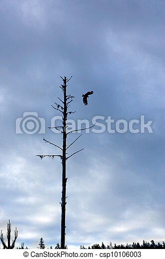 Bird of prey - csp10106003