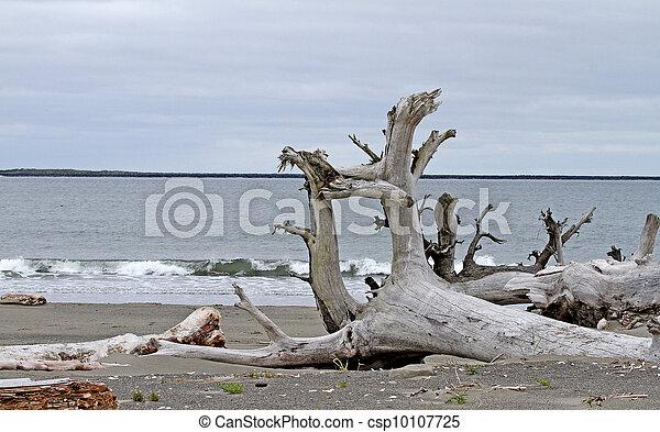 Driftwood at Ocean Shores, WA - csp10107725