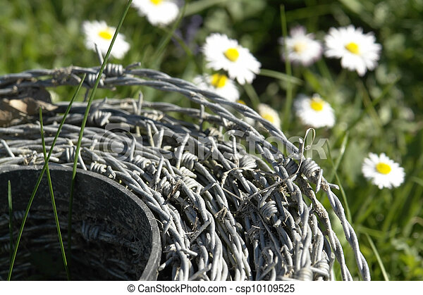 roll of barbwire and daisy flowers - csp10109525