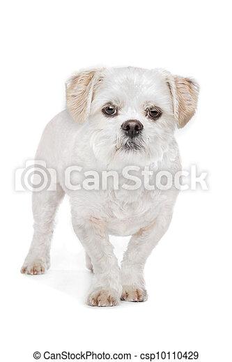 mieszany, hodować, pies - csp10110429