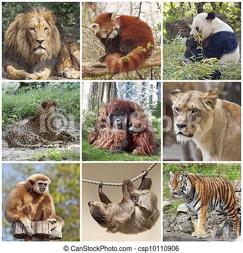 Animals - csp10110906