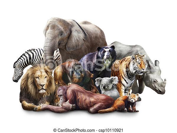 Group of animals - csp10110921