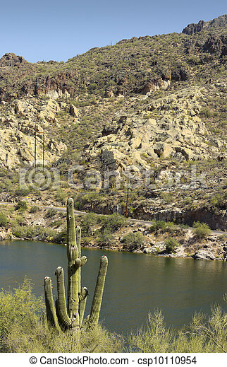 Saguaro at Canyon Lake, Arizona - csp10110954