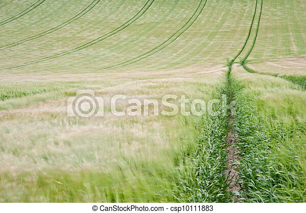 Landscape across agricultural fields on windy Summer day - csp10111883