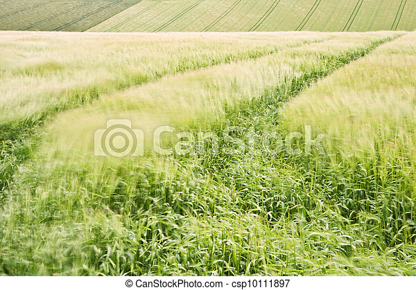 Landscape across agricultural fields on windy Summer day - csp10111897
