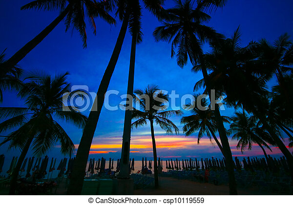 coconut trees silhouette at sunset - csp10119559