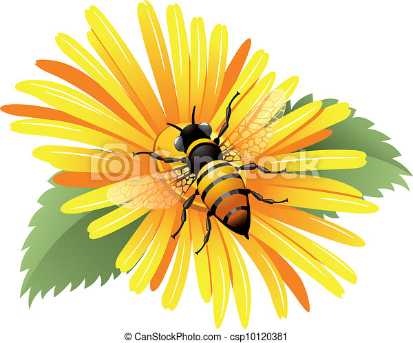Bee on a yellow daisy - csp10120381