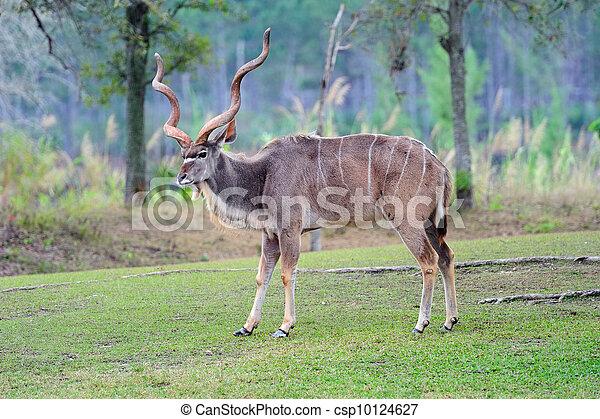 giant eland - csp10124627