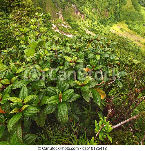 Saint Kitts Tropical Vegetation - csp10125412