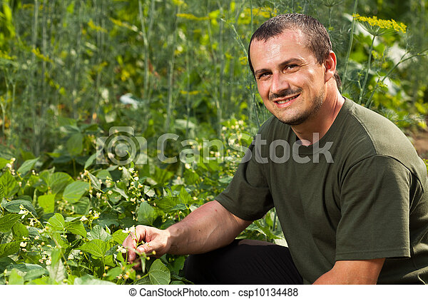 Farmer near a field of broad beans plants - csp10134488