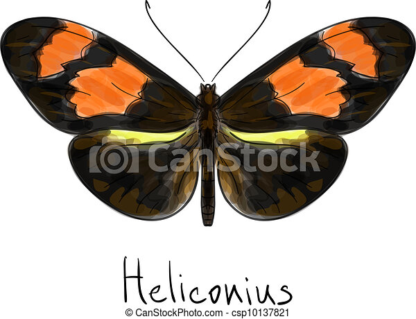 Butterfly Heliconius. Watercolor imitation. - csp10137821