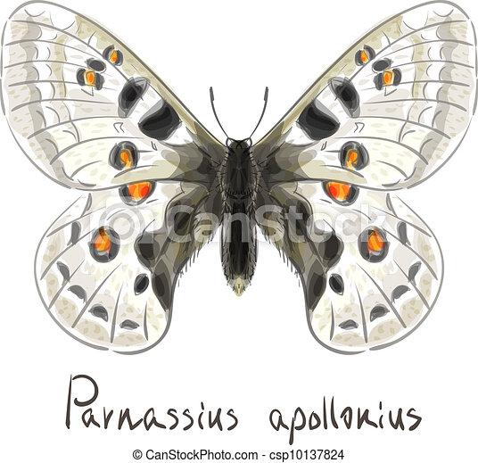 Butterfly Parnassius Apollonius. - csp10137824