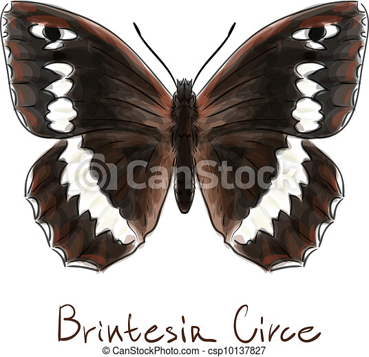 Butterfly Brintesia Circe. Watercolor imitation. - csp10137827